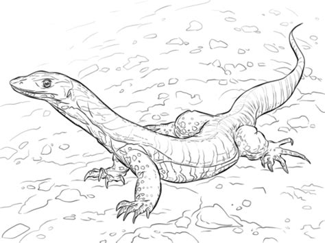 monitor lizard coloring pages sand goanna coloring page from monitor lizard category