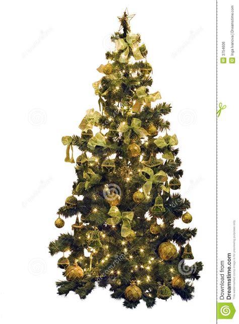 christmas pine tree royalty  stock image image