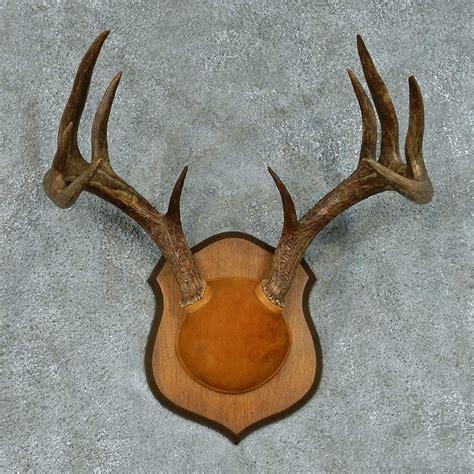 Deer Rack For Sale by Whitetail Deer Antler European Mount For Sale 13453 The