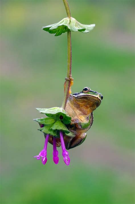 frog baby swing 1000 ideas about cute frogs on pinterest frogs tree