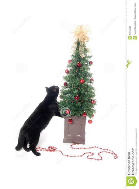 black cat and christmas tree royalty free stock photo
