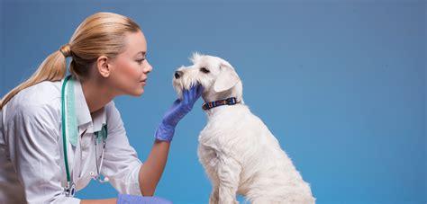 pet care professions insured bolt insurance