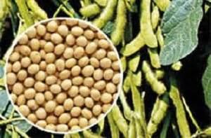 Jual Bungkil Kedelai Di Medan distributor benih kedelai di medan kios pupuk