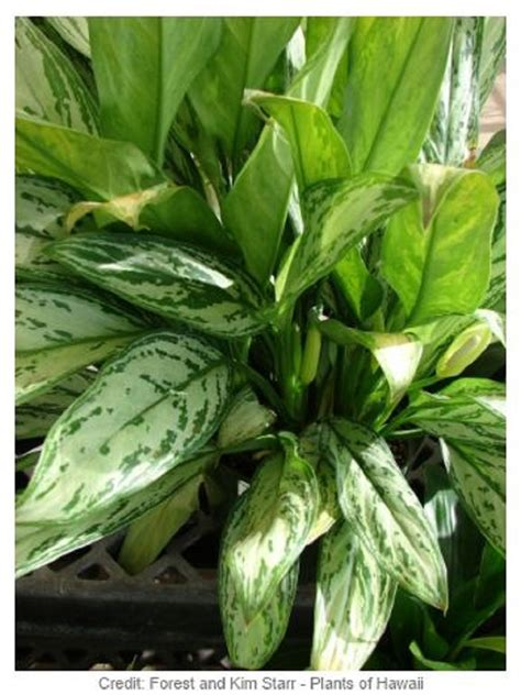 top 10 air detoxifying plants for indoor use top inspired