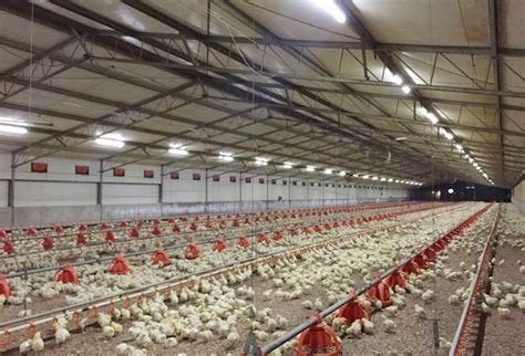 poultry farm lighting system chicken farm light poultry lighting broiler lights led
