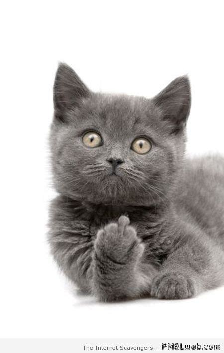 Middle Finger Cat Meme - daily sarcasm a kick butt collection of funnies