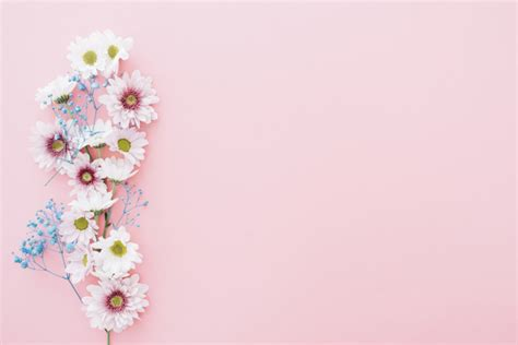 wallpaper bunga cute cute flowers on pink background with space on right photo