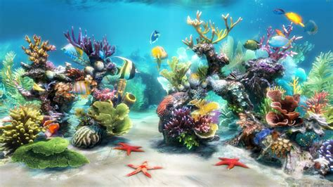 aquarium  wallpaper  pc wallpapersafari