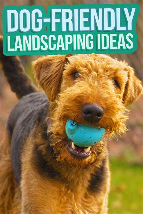 friendly backyard landscaping ideas friendly backyard landscaping ideas budget dumpster