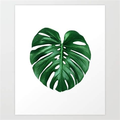 Poster Monstera monstera deliciosa print monstera leaf tropical leaf
