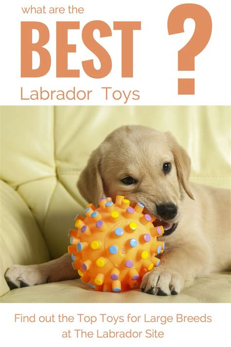 what are the best chew toys for puppies 17 best ideas about toys on diy toys diy and toys