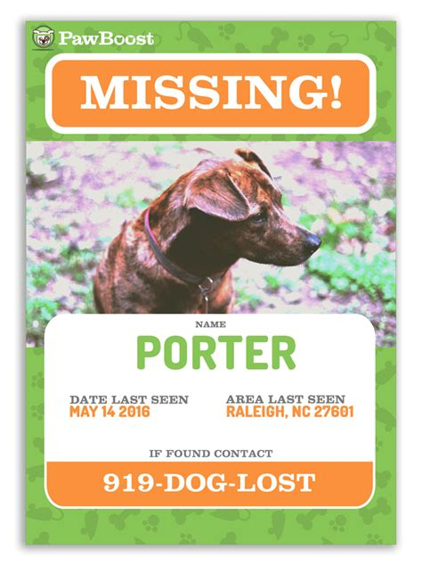 Find Your Lost Pet Lost Pet Flyer Template
