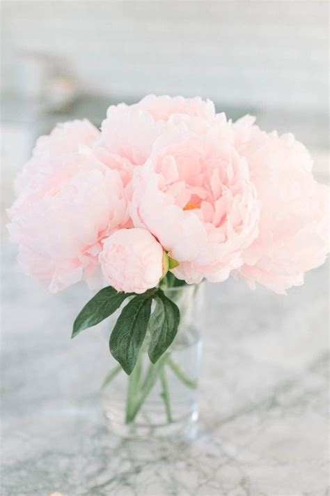 pink peonies best 25 pink peonies ideas on pinterest