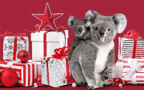 12 christmas gift ideas for animal lovers currumbin