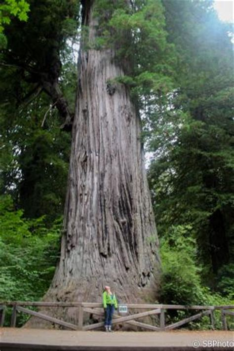 big tree and the human ant. a rare photo of me in front of