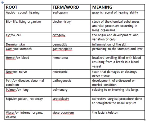 medical terms medical terminology marisela s personal page