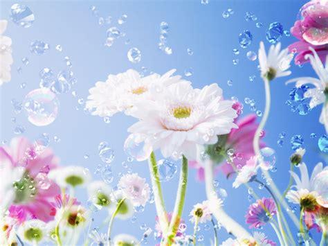 wallpapers for desktop background flowers pretty flower backgrounds wallpaper wallpaper hd