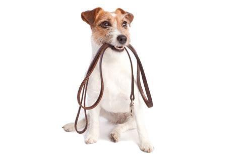 when can i walk my puppy walking noah s ark pets