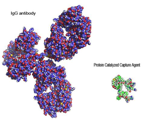 protein agency improving the fundamentals of protein catalyzed capture