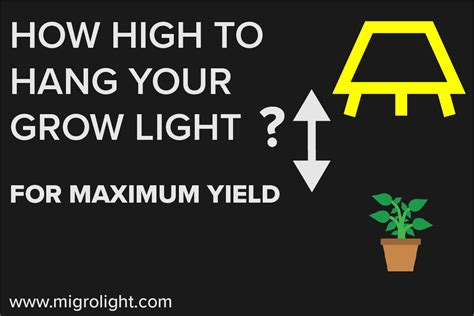how high to hang pictures learn how high to hang your grow light for maximum yields