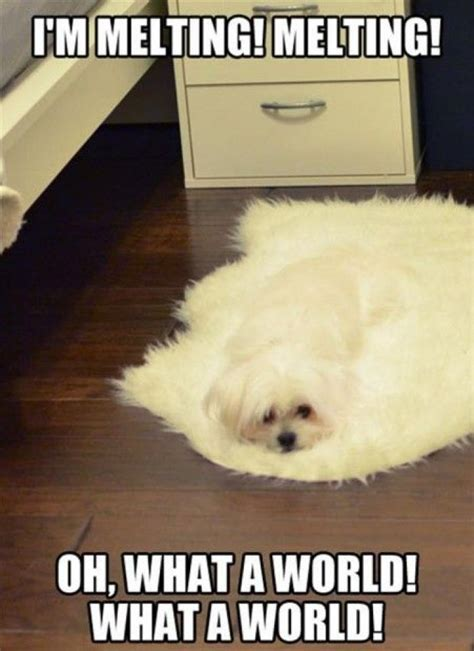 Silly Dog Meme - 1000 images about funny memes on pinterest cat memes