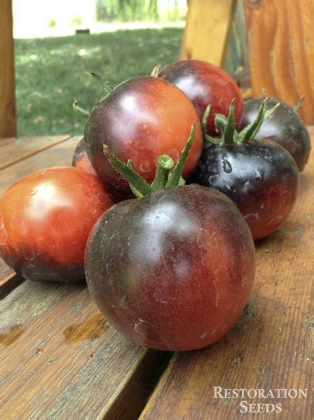 bosque blue tomato organic restoration seeds