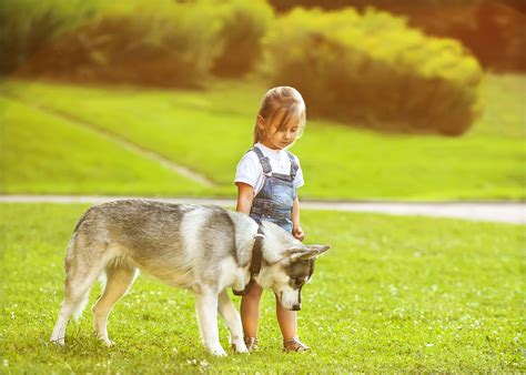 dogs that are with children how to teach safe behavior around dogs