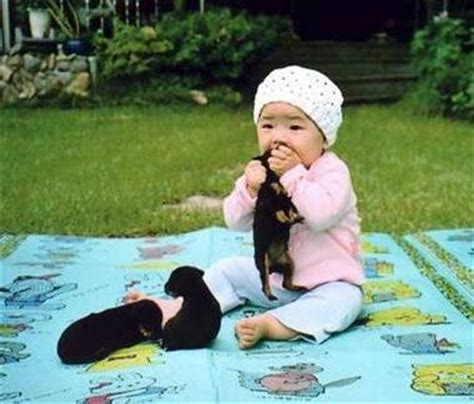 do dogs eat cats do really eat cats dogs monkeys elephants tigers and giraffe boners