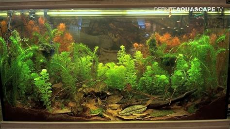 aquarium design youtube biotope aquarium design contest 2015 the 5th place
