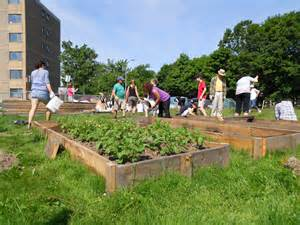What Is A Community Garden by 10 Steps To Starting A Community Garden Halifax Garden
