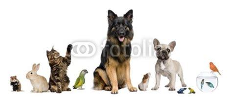 fotos animales juntos configurar fotomural quot grupo de animales juntos delante de
