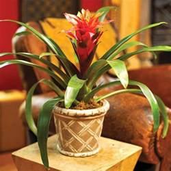 Incroyable Plante Dans La Chambre #4: plantes-d-interieur-depolluantes-plante-verte-d-int%C3%A9rieur-jolie-fleur-rouge-pour-chez-vous.jpg