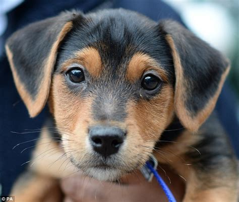 could you give a pet at battersea a home this