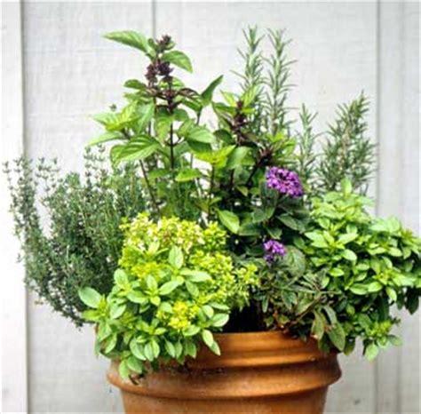 herb container garden ideas decking design patterns container gardening ideas herbs