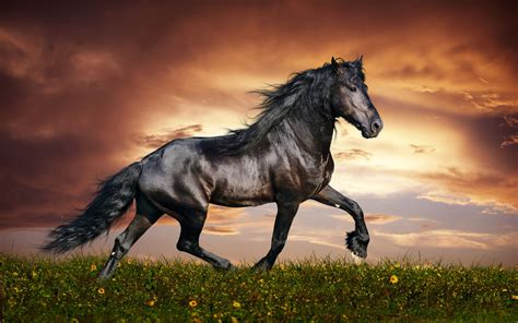 wallpaper hd black horse arabian black horse wide desktop wallpapers new hd