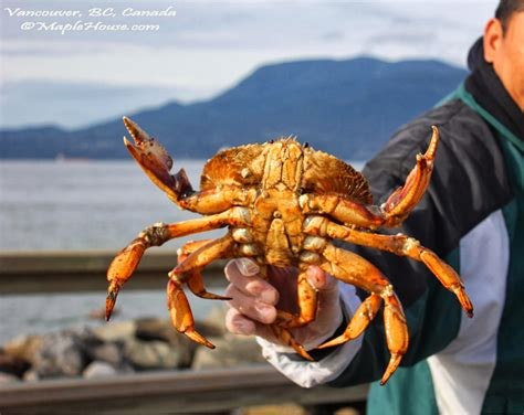 dungeness crab fishing images