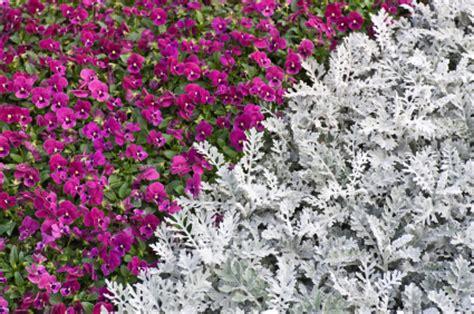 elenco fiori autunnali fioriere d autunno ecco quali piante mettere sul balcone