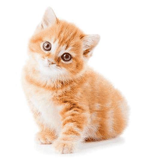 berta tiene un gatito adoptando un nuevo gatito mascotas foyel