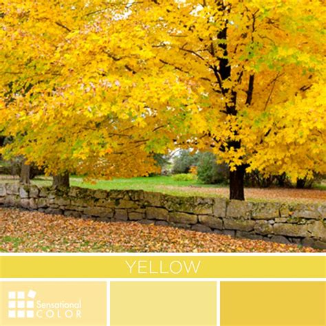 yellow colour meaning yellow color palette sensational color