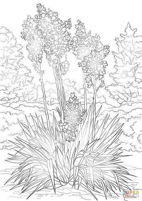 coloring pages of mexican flowers yucca flower coloring page free printable coloring pages