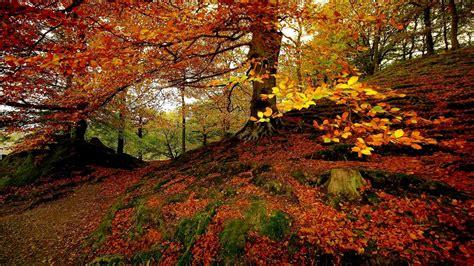 Autumn Equinox Wallpaper