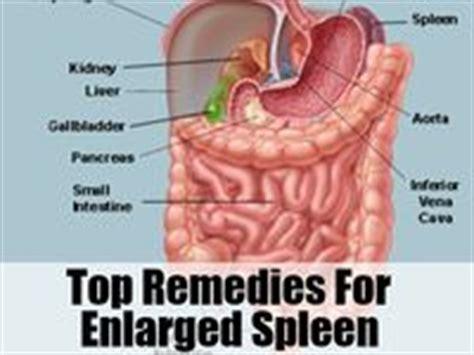 Spleen Detox Juice by 15 Best Images About Enlarged Spleen On Juice