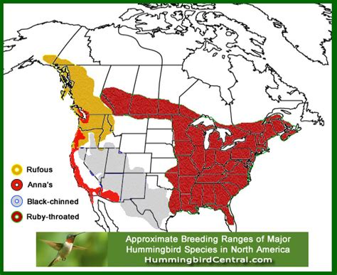 hummingbird migration in the spring and fall through the