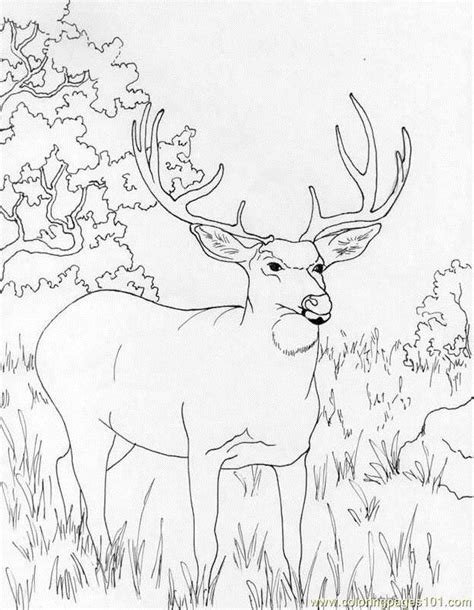 coloring page deer muledeer coloring page free deer coloring pages