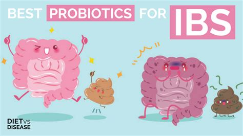 the best probiotics best probiotics for irritable bowel ibs