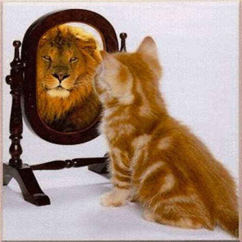 Cat Mirror picture of cat looking in mirror and sees a white