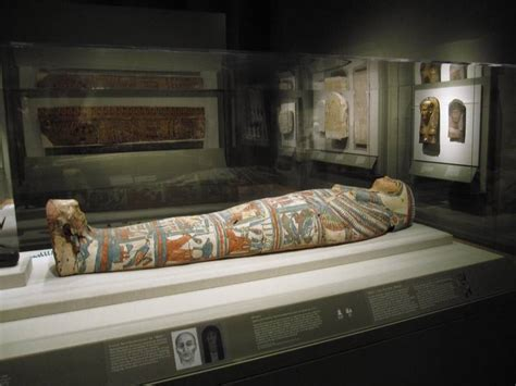 walters museum new year 5 free things to do and see in baltimore