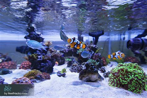 Saltwater Aquascape by 10 Step By Step Tips To Easily Create A Reef Tank
