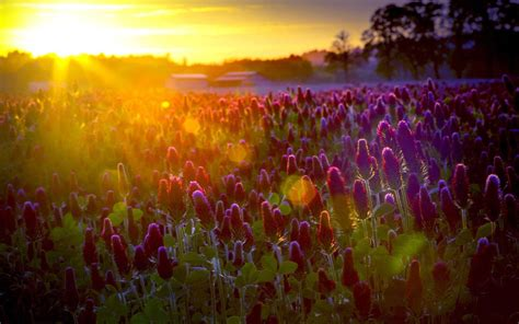 wallpaper flower field flower field wallpapers wallpaper cave