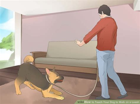 teaching a puppy to walk on a leash how to teach your to walk on a leash 12 steps with